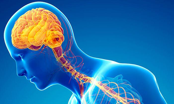 Чем болезнь Альцгеймера отличается от болезни Паркинсона