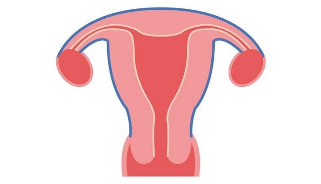 Шейка матка до и после родов: как выглядит, какая должна быть