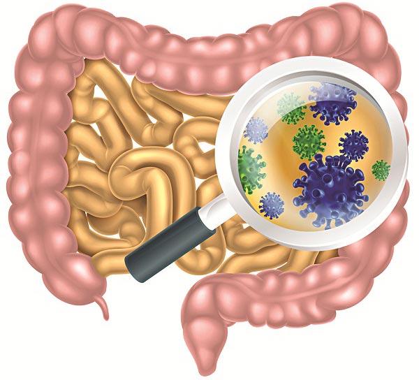 Вирусы в организме